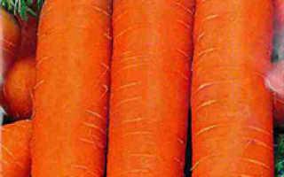 Морковь устойчивая к морковной мухе
