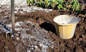 Известковая почва