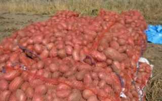 Бизнес на продаже картофеля