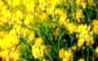Как можно повысить плодородие почвы