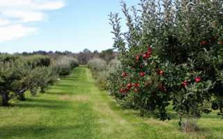 Осенняя посадка яблонь