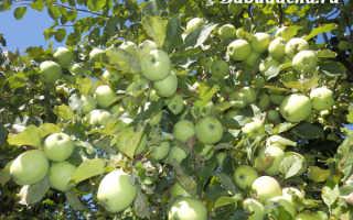 Как развести мочевину для опрыскивания деревьев