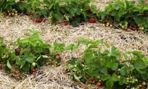 Материалы для мульчирования почвы