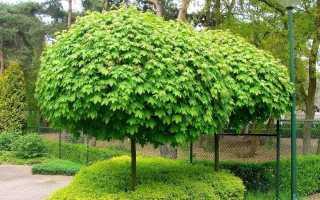 Дерево шар