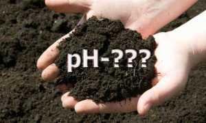 Как узнать кислая почва или нет