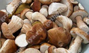 Первичная обработка грибов
