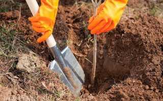 В какое время года сажают деревья