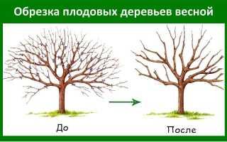 Когда производится обрезка плодовых деревьев