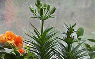Нехватка азота у растений