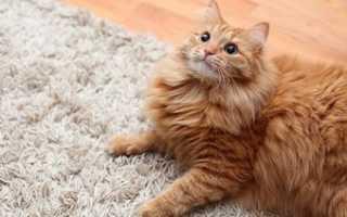 Как бороться с шерстью кота в квартире