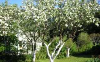 Можно ли побелить деревья водоэмульсионной краской