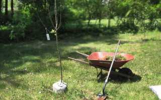 Когда сажать деревья на участке
