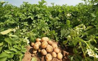 Как сохранить урожай