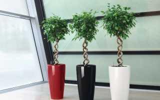 Какие комнатные растения любят тень