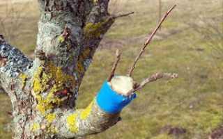 Прищепить дерево
