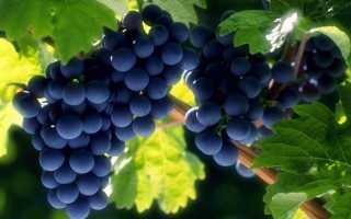 Как убрать на зиму виноград