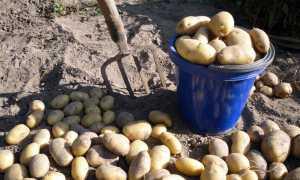 Картошка на огородах выкопана