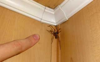 Домашние насекомые в квартире: названия и фото