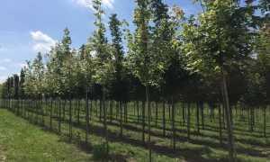 Питомники растений в россии