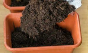 Как приготовить почву для рассады
