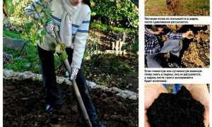 Надо ли копать огород осенью