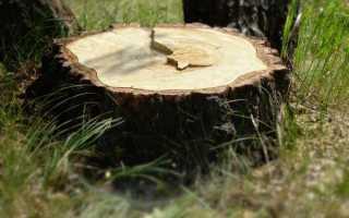 Как избавиться от пня спиленного дерева