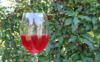 Винные дрожжи из винограда в домашних условиях