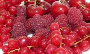 Дерево с красными плодами