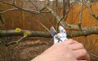 Обрезка садовых деревьев осенью видео