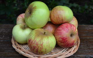 Шаропай яблоня