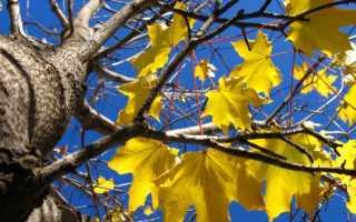 Почему желтеют листья у деревьев