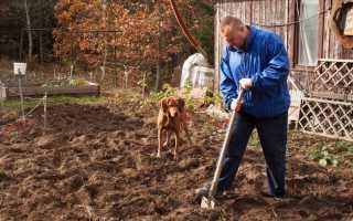 Надо ли пахать огород под зиму