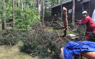 Как убрать дерево с участка