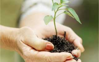 Щелочная почва что делать