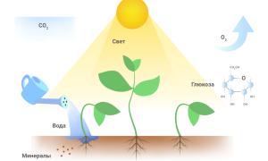 Соотношение красного и синего спектра для растений