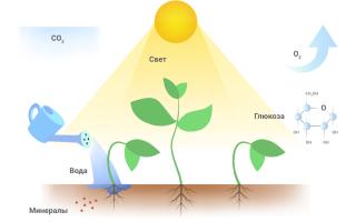 Спектр для растений длина волны