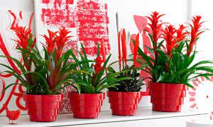 Растение с красным цветком