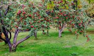 Какие плодовые деревья сажают осенью