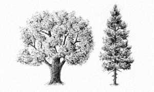 Кора дерева картинки