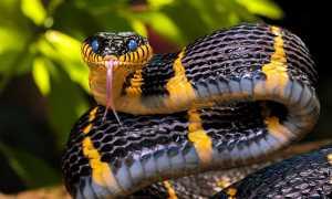 Где обитают змеи