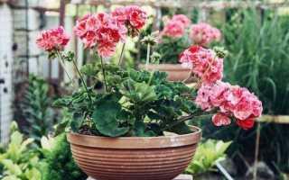 Растения для привлечения денег