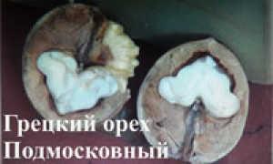 Внуковский питомник растений