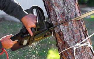 Можно ли спилить дерево на своем участке
